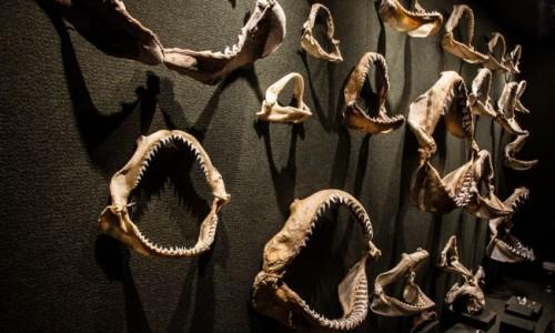 Museu Oceanográfico Univali em Piçarras