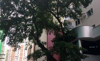 Não te querem Ficus