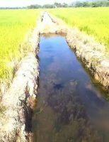 Qual é o seu negócio: arroz ou turismo?